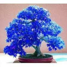 klen-bonsay_6-min-e1521966815295.jpg