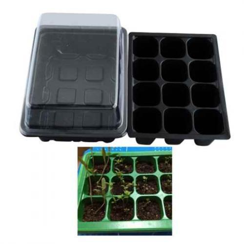 seedlings_tray.jpg